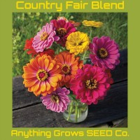 Zinnia - Country Fair Blend - Organic
